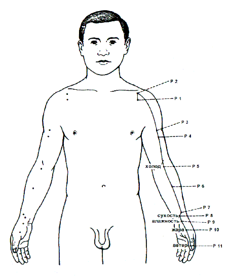 О меридианах на примере меридиана легких
